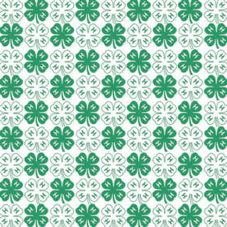 4-H Clovers edited