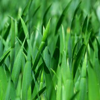 grass2-edited