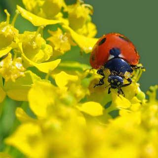 ladybug2-edited