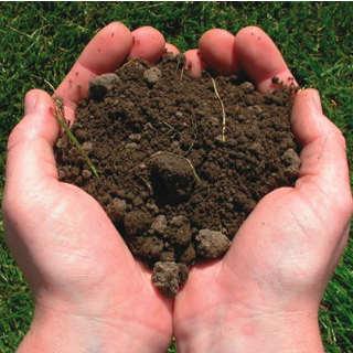 soil-edited