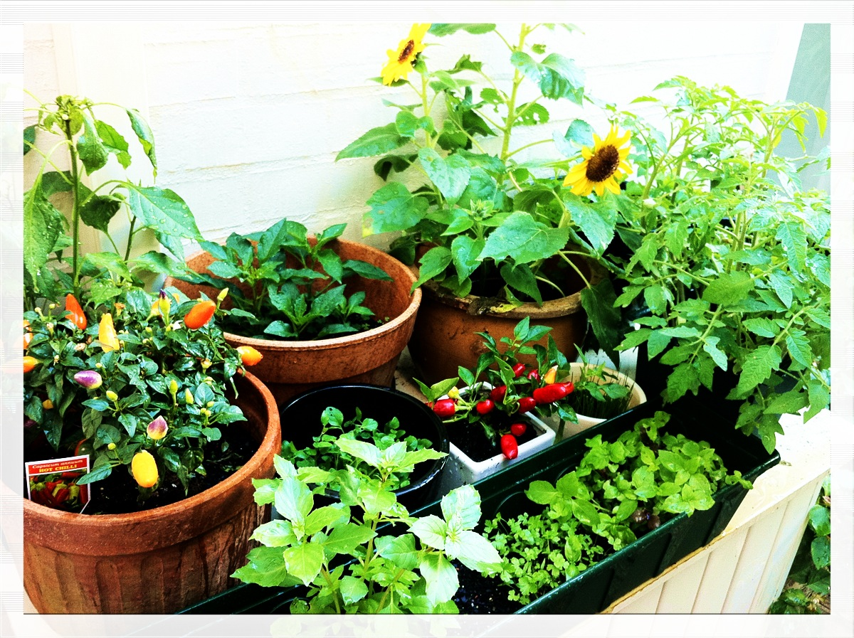 Flower vegetable gardening arapahoe county Garden club program ideas